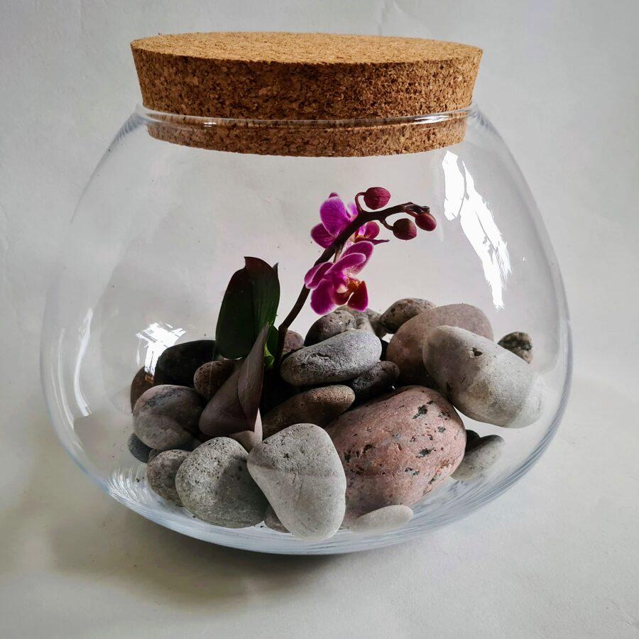 Orhideja - šobrīd noziedējusi (17cm x 20cm)