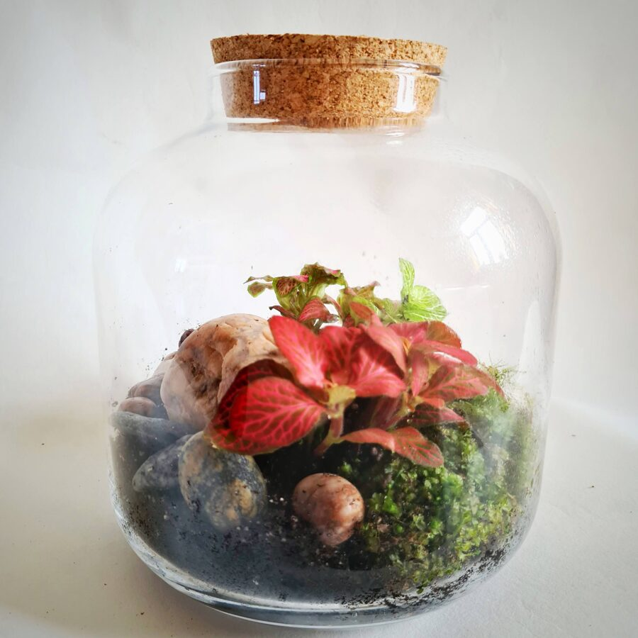 Akmens dārzs (21cm x 20cm)