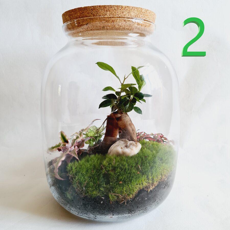 Maģijas koks (30cm x 26cm)