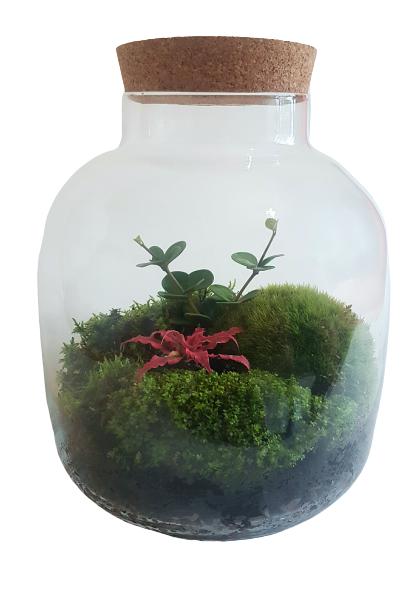 Slēptais dārzs (30cm x 25cm)