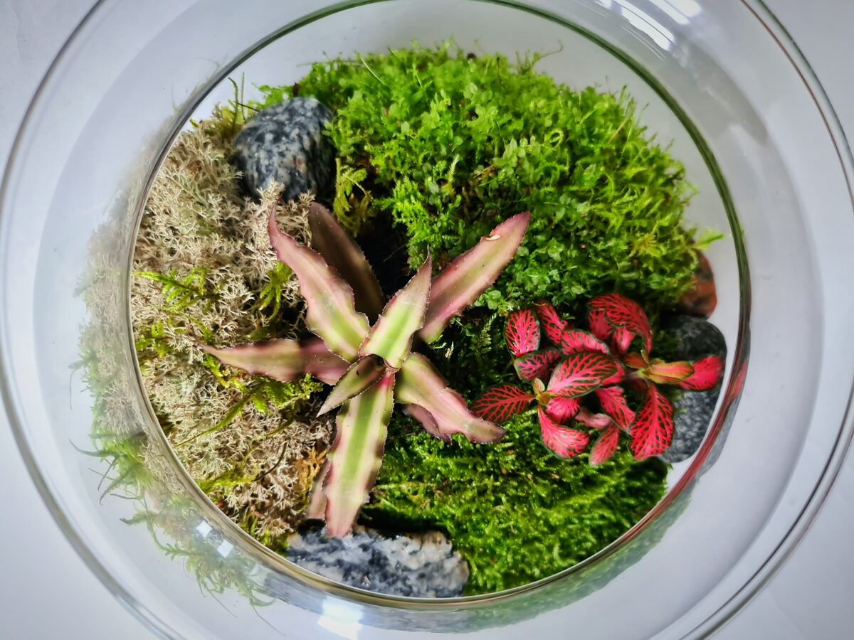 Ēdenes dārzs (25cm x 24.5cm)