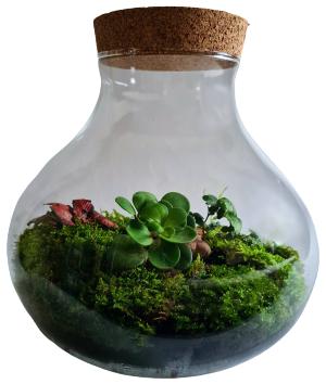 Akmens dārzs  (24cm x 26cm)