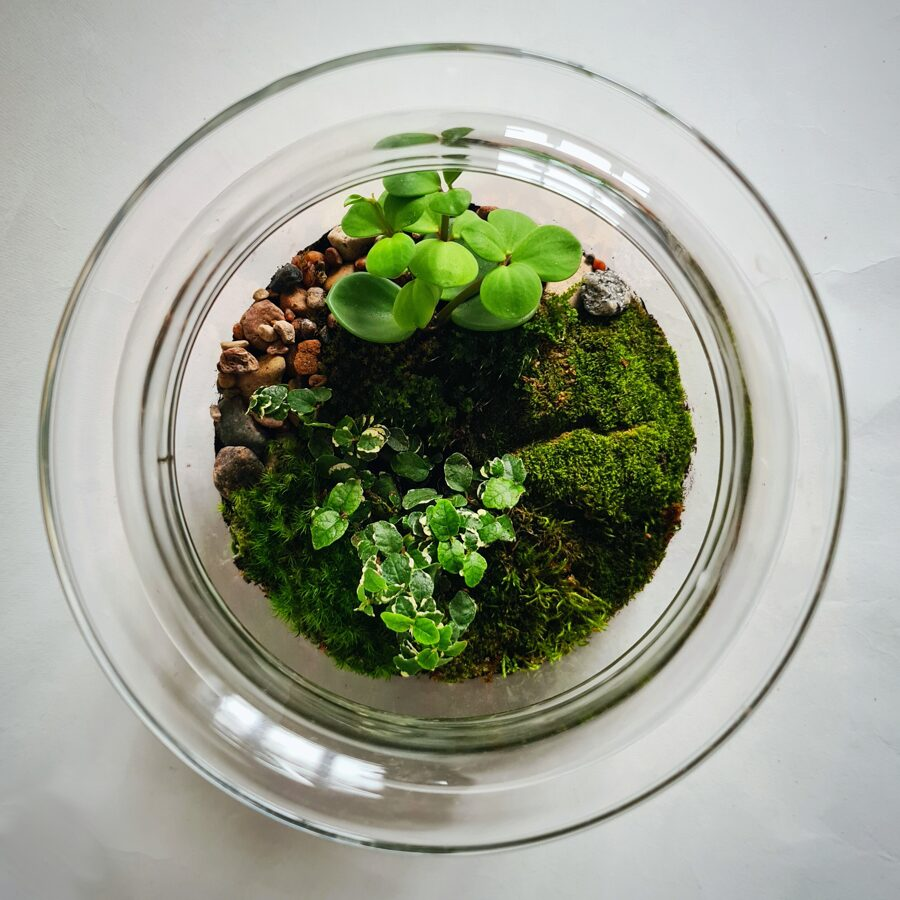 Elfu dārzs  (25cm x 19cm)