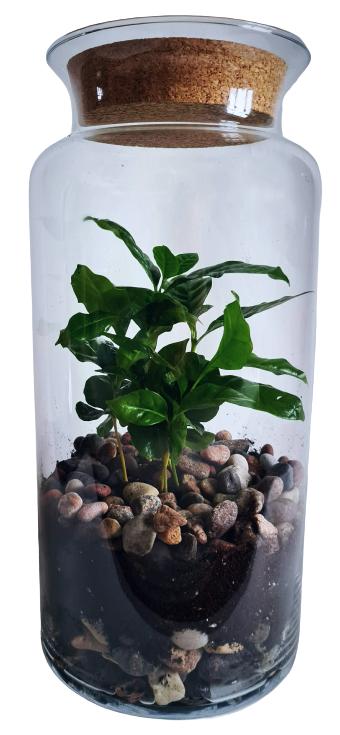 Kafijas pauze (35cm x 18cm)