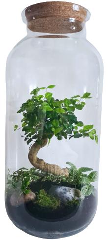 Koks no pasakas (51cm x 23cm)