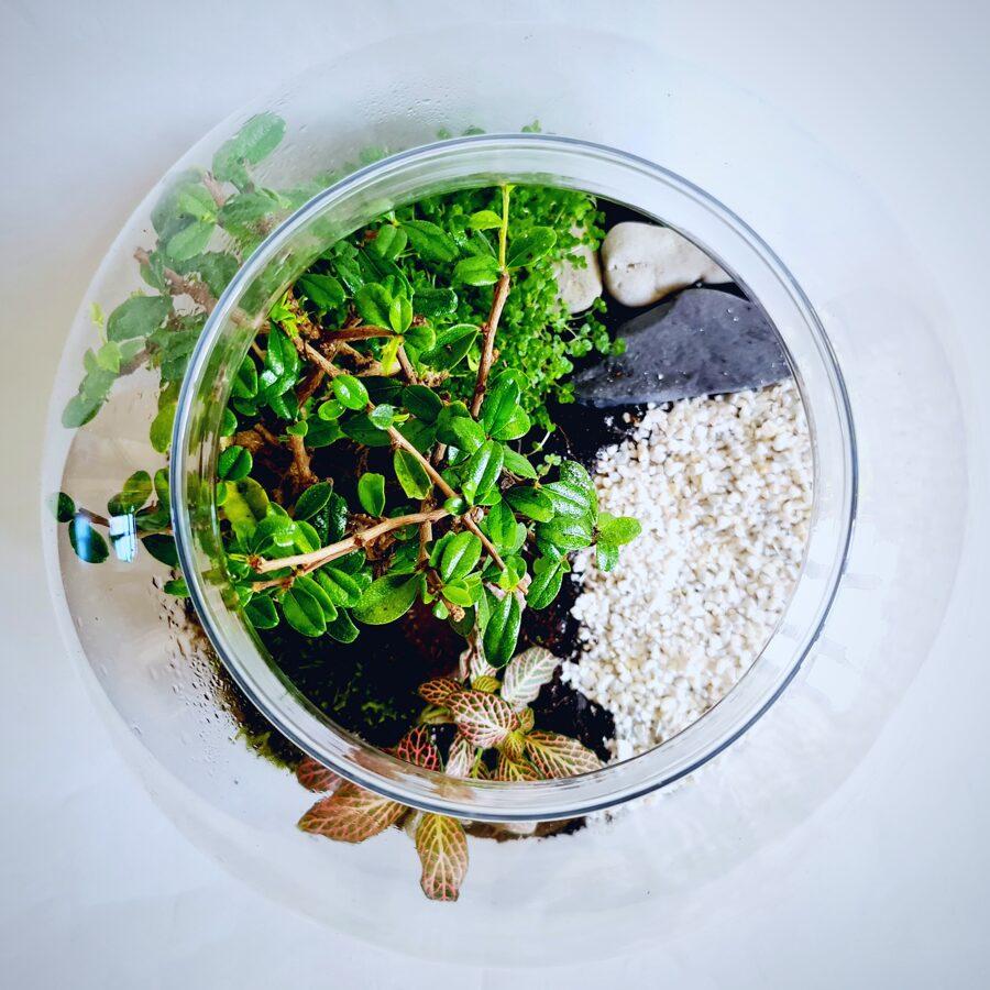 Geišas dārzs (30cm x 26cm)